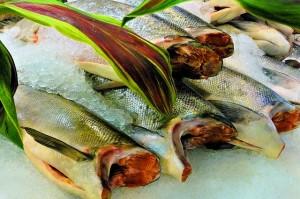 fisch-omega-3-fettsaeuren