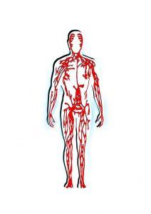 Krillöl für Herz und Kreislauf
