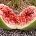 Spermiogramm Fruchtbarkeit vitamine