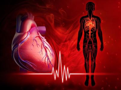 Omega-3 Fettsäuren Puls Blutdruck