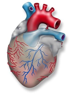 Omega-3 schützt das Herz
